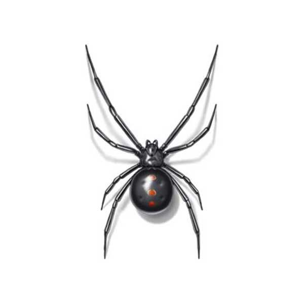 Black Widow Extermination From Anderson Pest Control