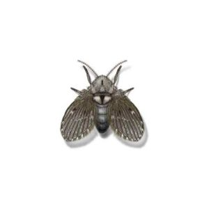 Drain Fly Extermination From Anderson Pest Control