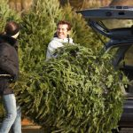 Shake out your Christmas tree to get rid of Christmas tree insects before bringing it into your Chicago IL or Lake County IL home - Anderson Pest Solutions