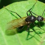 Carpenter ants are often mistaken for termites in the Chicago IL area. Learn more from Anderson Pest Solutions!
