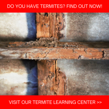 Termite Control in Chicago; Anderson Pest Solutions