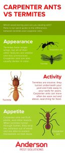 How to tell apart carpenter ants and termites in Illinois & Indiana - Anderson Pest Solutions