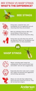 Telling apart bees and wasps in Illinois & Indiana - Anderson Pest Solutions