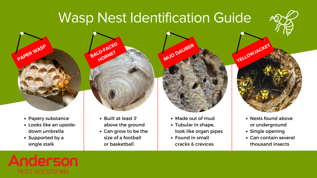 Wasp nest identification infographic in Illinois and Indiana - Anderson Pest Solutions